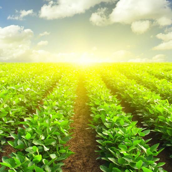 Fertilizzanti e correttivi